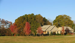 View across property toward a cream house surrounded by large shade trees during fall.