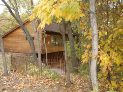 Cedar sided house nestled in woods during fall with golden leaves on trees and ground, wooden picket fence.