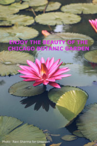 "A bright pink water lily on a pond with title, "" Enjoy the beauty of the Chicago botanic Garden."""
